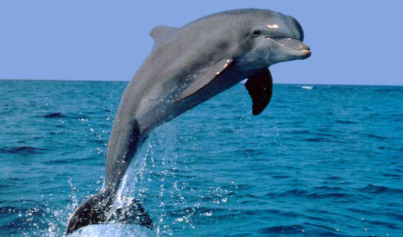 BBC: Дельфины. Морские спасатели от 1С Интерес