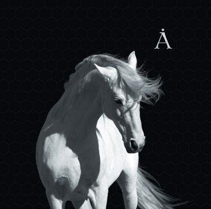 Аквариум. Лошадь белая (LP) купальник слитный для девочки arina festivita цвет синий gi 011806 af размер 152 158