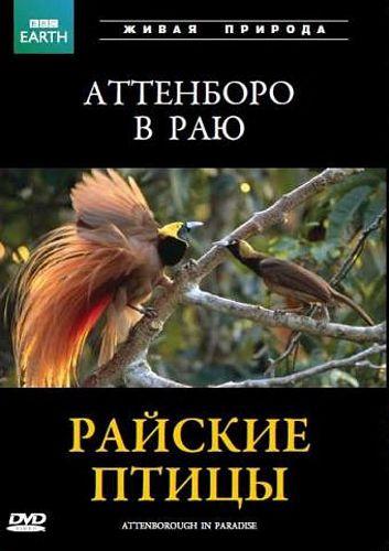 BBC: Райские птицы Attenborough in ParadiseДокументальный фильм BBC: Райские птицы от режиссера Пола Реддиша. Добро пожаловать в дикий мир Новой Гвинеи &amp;ndash; страны гор, стремительных рек и густых тропических лесов.<br>