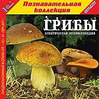 ГрибыПознакомиться с многообразием грибов, узнать, когда, где и как собирать съедобные и лекарственные грибы, совершить виртуальные экскурсии в весенний, летний и осенний лес поможет вам электронная энциклопедия Грибы.<br>
