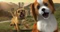 Pet grooming games free online