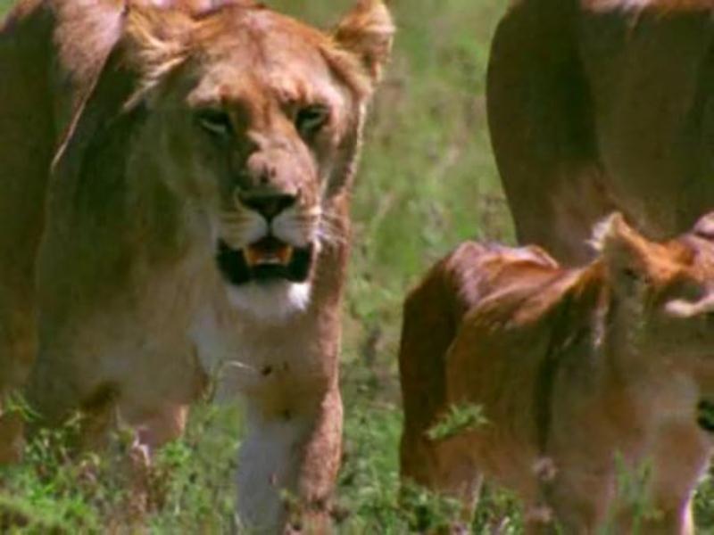 фильм про львов прайд