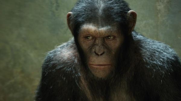 """О """"планете обезьян""""."""