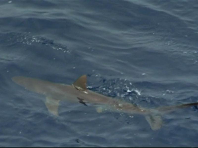 BBC: Тайны Тихого океана (5 DVD) от 1С Интерес